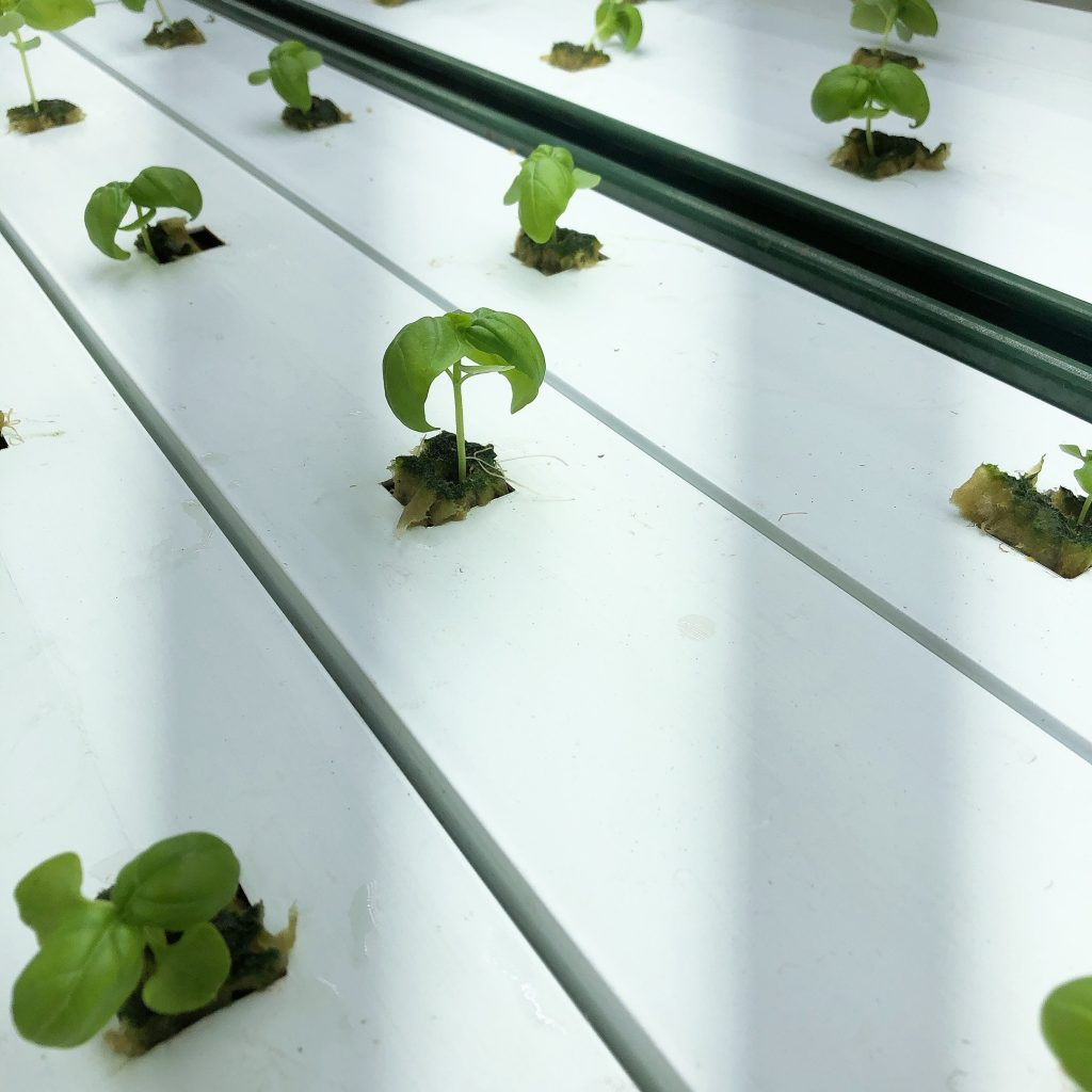 What is Container Farming