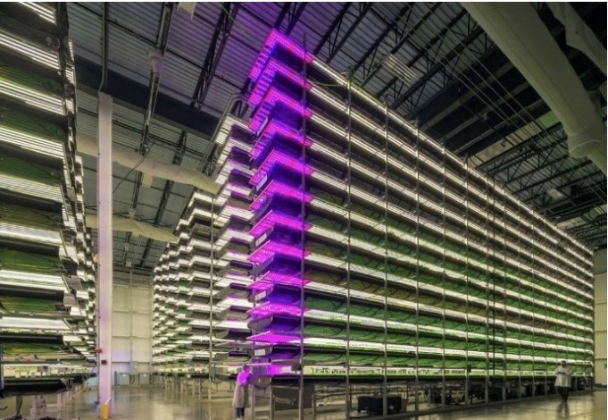 Look Inside This $42 Million Dollar Indoor Farm!