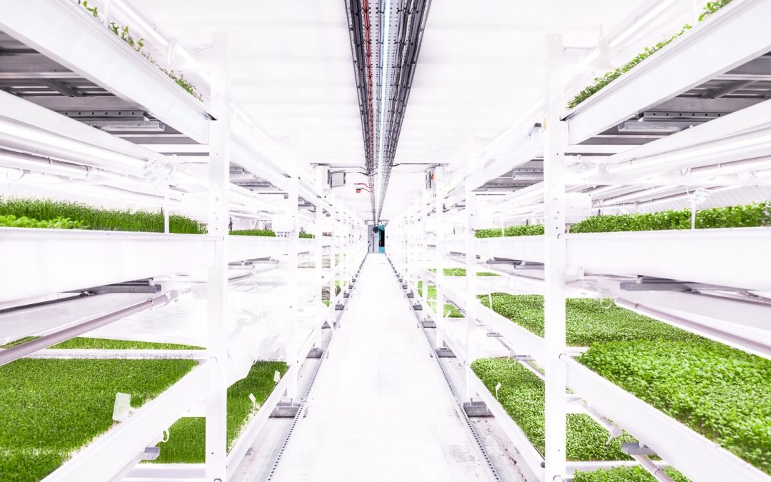 A Unique Farm is Growing in the Underground Tunnels of London