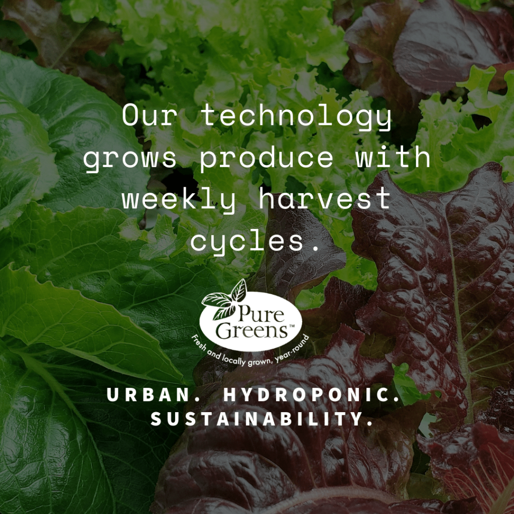 What is an Ocean Container Farm from Pure Greens