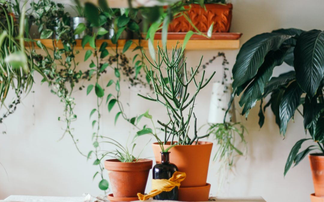 10 Health Benefits of Growing Plants Indoors