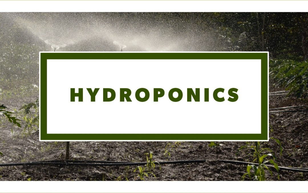 Easy Hydroponic Systems for Beginners