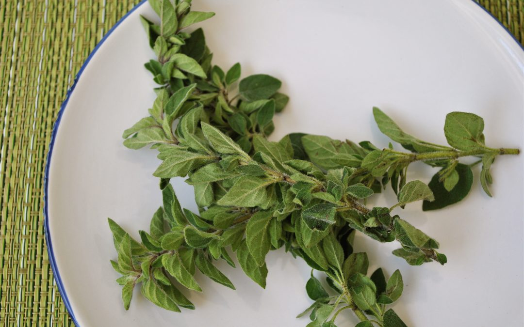 How to Grow Oregano Hydroponically