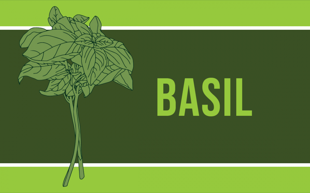 Why Are My Basil Leaves Turning Green? And Other Basil FAQs…