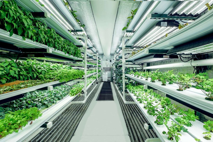 Pure Greens offers turnkey hydroponic container farms