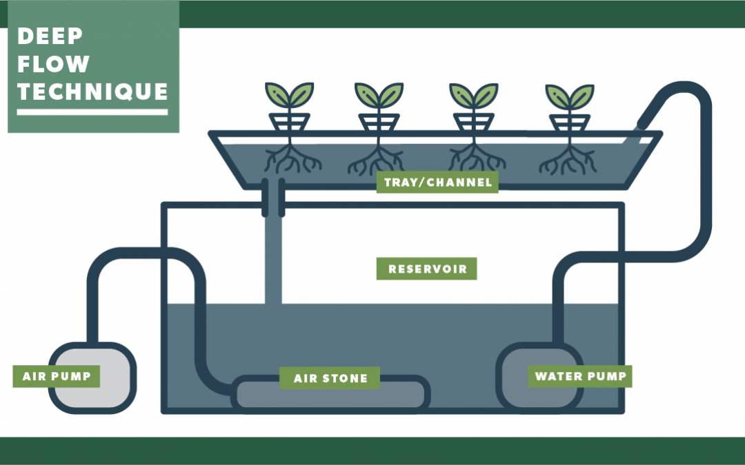The Benefits of Deep Flow Technique (DFT) Hydroponic Systems