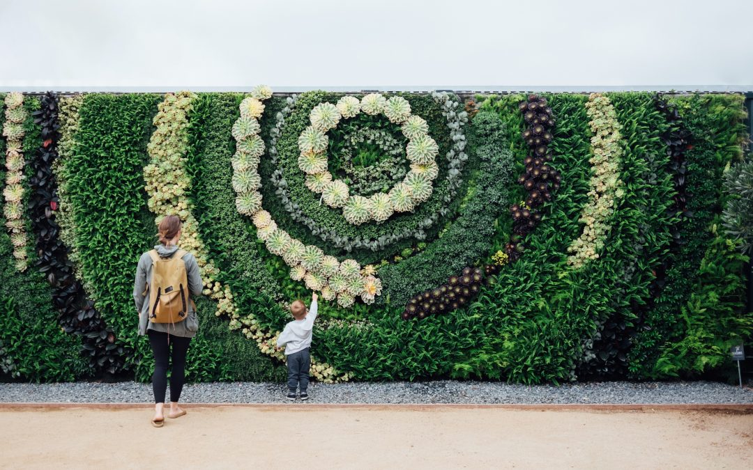 What is a Living Plant Wall?