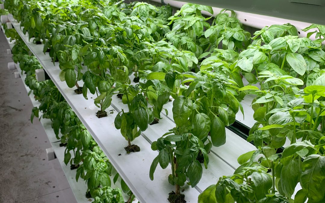 How Hydroponics is Used in Commercial Agriculture