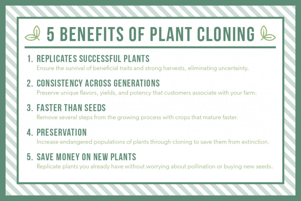 5 Benefits of Plant Cloning: 1. Replicates sucessful plants, 2. consistency across generations, 3. faster than seeds, 4. preservation, 5. save money on new plants