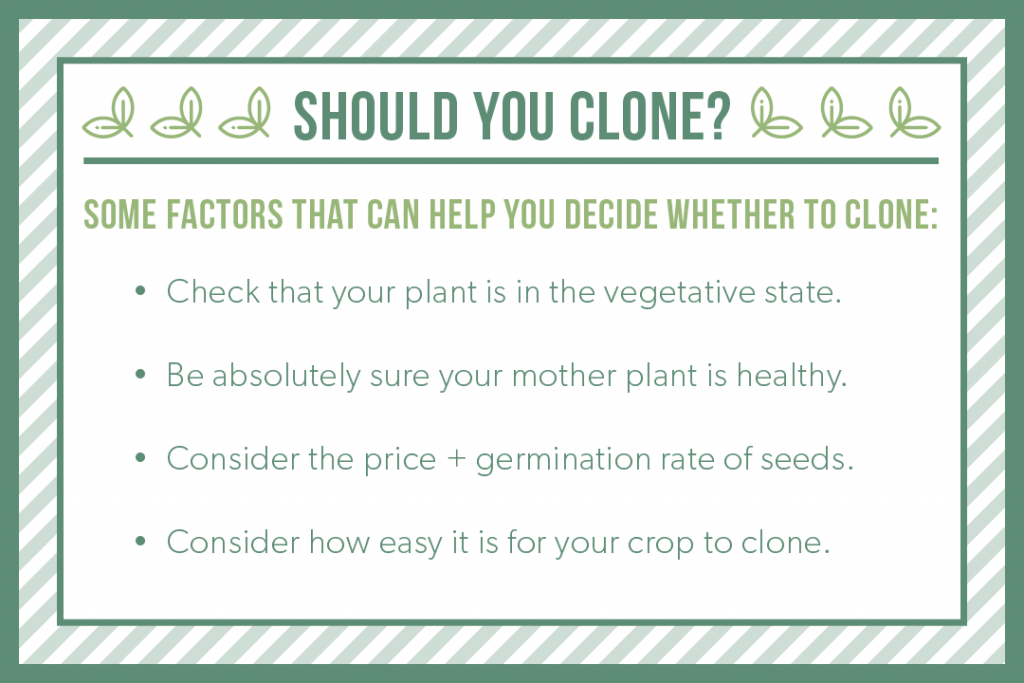 Should You Clone? Some factors to help you decide: Check your plant is in the vegetative state, be sure your mother plant is healthy, consider the price and germination rate of seeds, and consider how easy it is for your crop to clone