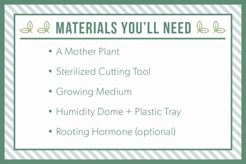 Materials you'll need: a mother plant, sterilized cutting tool, growing medium, humidity dome and plastic tray, rooting hormone
