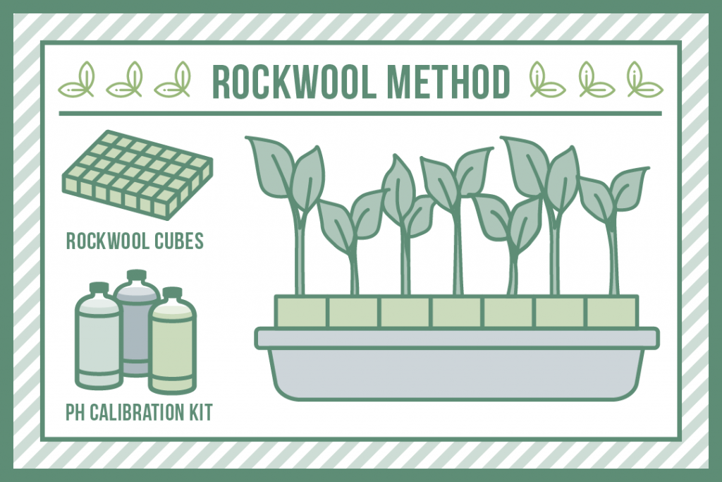 The rockwool method of plant cloning