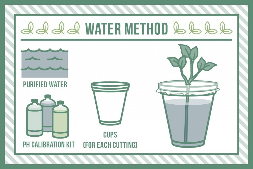 the water method of plant cloning