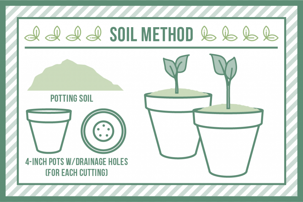 the soil method of plant cloning
