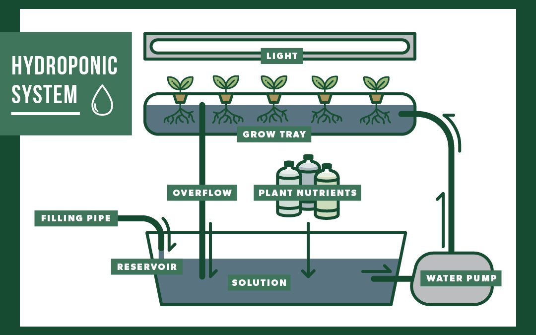 How to Plan for a Hydroponic System